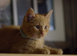 virale Hits durch Katzen