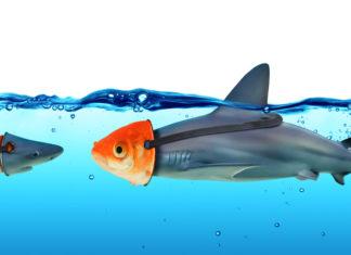 Goldfisch und Hai, die eine Maske tragen.